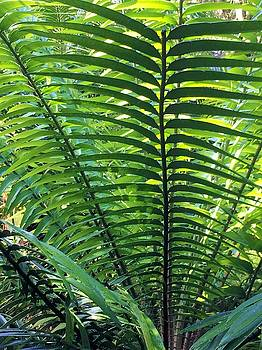 Palm Fronds by Kay Gilley