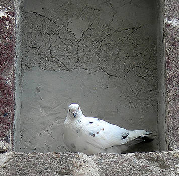 Peace Dove by Kenneth Carpenter