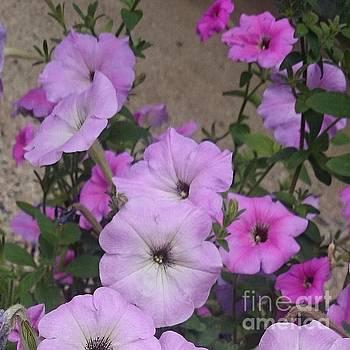 Pink Flowers  by Sobajan Tellfortunes