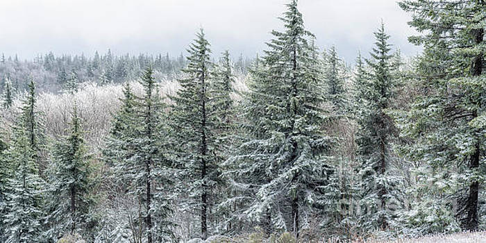 Rhime Ice Highland Scenic Highway by Thomas R Fletcher