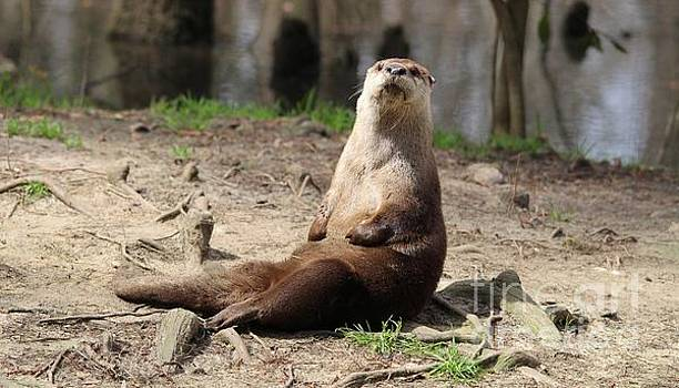 Paulette Thomas - River Otter