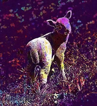 Sheep Lamb Field Farm Agriculture  by PixBreak Art