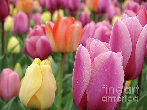 Spring Tulips by Rebecca Overton