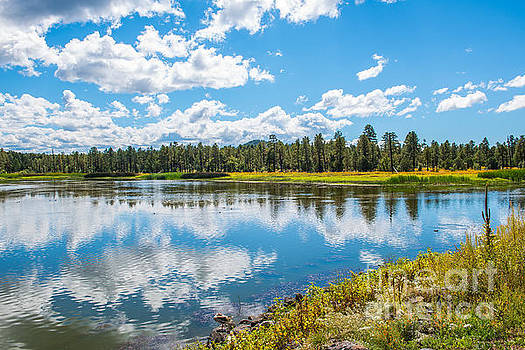 Woodland Lake Pinetop, Arizona by Michael Moriarty