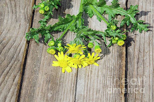 Yellow Weed by Elvira Ladocki