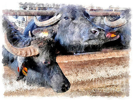 Buffaloes in the stable by Giuseppe Cocco