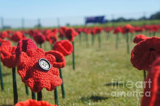 5000 Poppies by Therese Alcorn