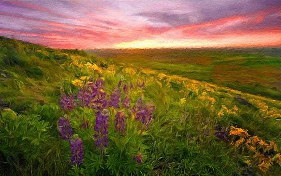 D J Landscape by Malinda Spaulding