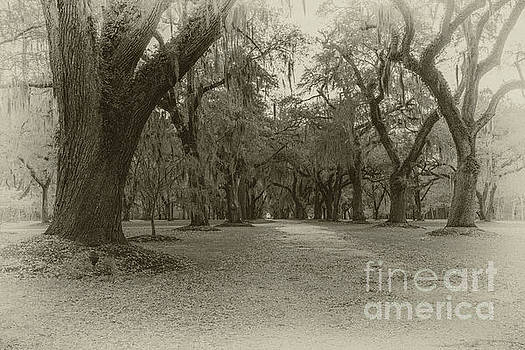 Dale Powell - Lowcountry Live Oak Tree Majesty