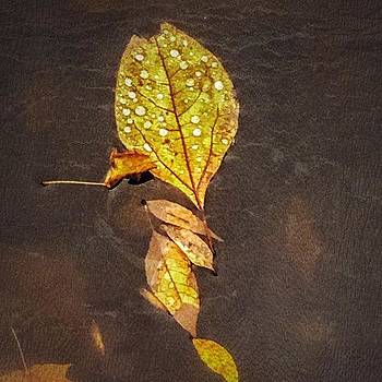 Golden leaves floating  by Phunny Phace
