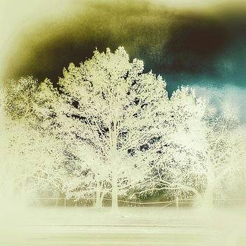 Abstract White Trees by Phunny Phace