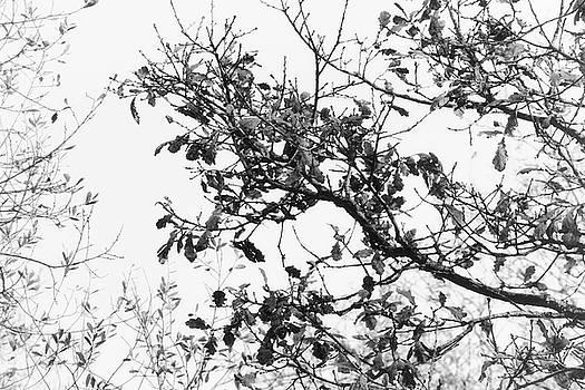 Nature by Frances Lewis