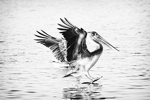 Michael McStamp - Pelican Landing