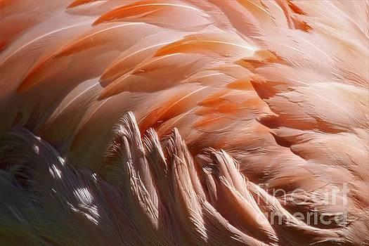 Flamingo Feathers by Paulette Thomas