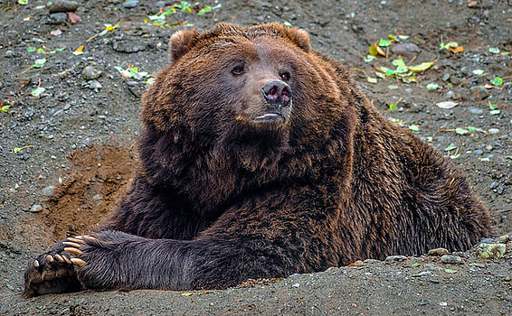 Grizzly bear 2 by Brian Stevens