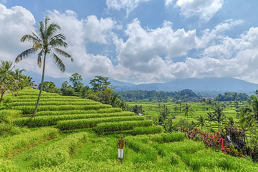 Jatiluwih - Bali by Joana Kruse