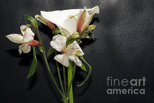 Nice Flowers by Elvira Ladocki