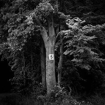 6 by Piotr Belcyr