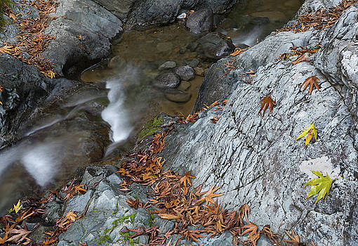 Water stream flowing in the river in autumn by Michalakis Ppalis