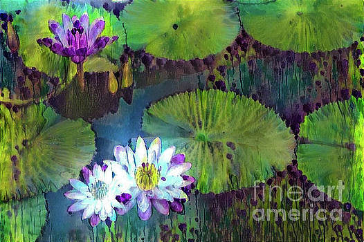 Jeweled Water Lilies by Amy Cicconi