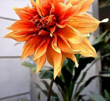 Love Flowers by Baljit Chadha