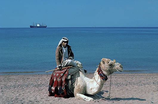 Arab on Camel at Red Sea by Carl Purcell
