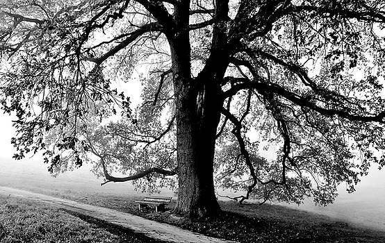 beautiful old Oak Tree by Werner Lehmann