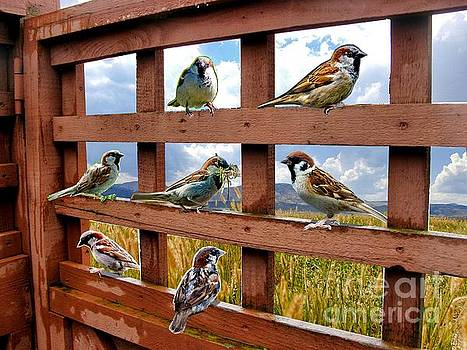 7 Birds - Collage and Enhanced by Tin Tran