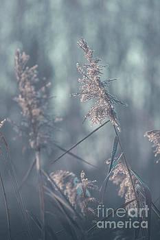 Dry grass in spring time, Poland. by Mariusz Prusaczyk
