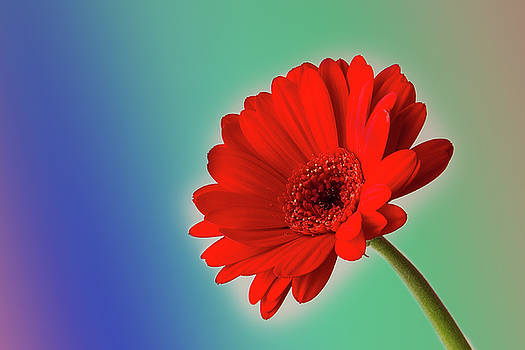 Flower by Christine Sponchia