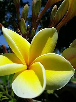 Hawaiian Beauty by Sonya Wilson