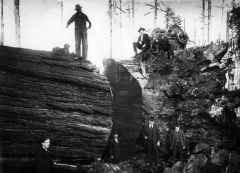 Daniel Hagerman - 7 MEN and DOG POSE WITH REDWOOD c. 1890
