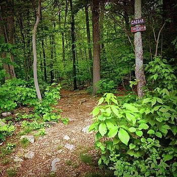 Path Through Woods by Amanda Richter