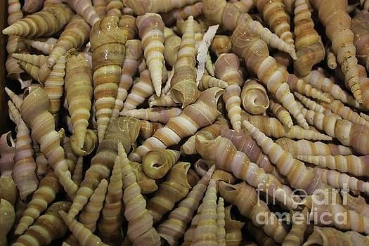 Paulette Thomas - Sea Shells