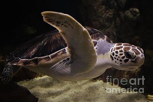 Sea Turtle by Paulette Thomas