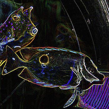 James Hill - Tropical Fish
