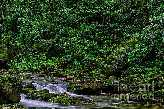 Kens Creek Cranberry Wilderness by Thomas R Fletcher