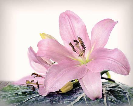 Lily by Nena Pratt