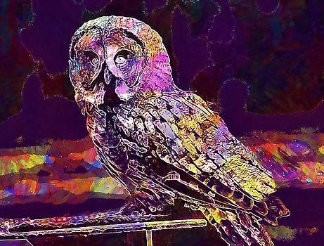 Owl Wildpark Poing Bird Feather  by PixBreak Art