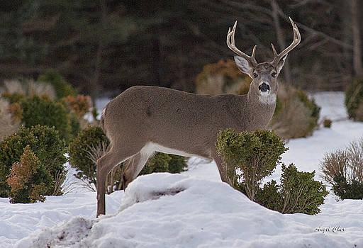 8 point Beauty by Angel Cher
