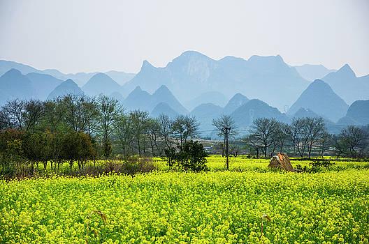 The rape flowers field scenery by Carl Ning