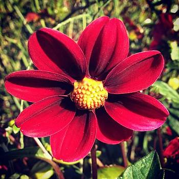 #flo #floa #fiori #flora #flower by Val A