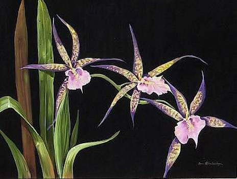 Spider Orchids by Stan  Sternbach