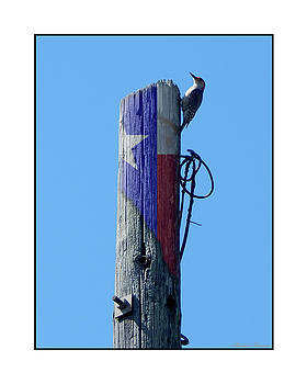 #8667 Woodpecker by Barbara Tristan
