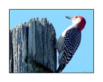 #8669 Woodpecker by Barbara Tristan