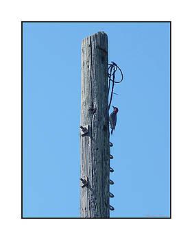 #866X Woodpecker by Barbara Tristan