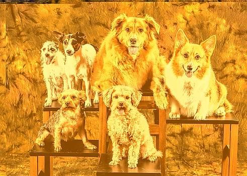 Dog by Dorothy Binder