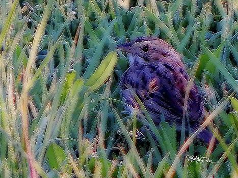 #9424 Spring Sparrow by Barbara Tristan