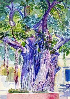 A banayan tree by Prabhu  Dhok