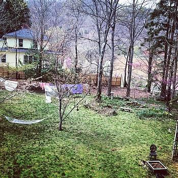 A beautiful backyard garden in Erwin, TN. by William Sullivan